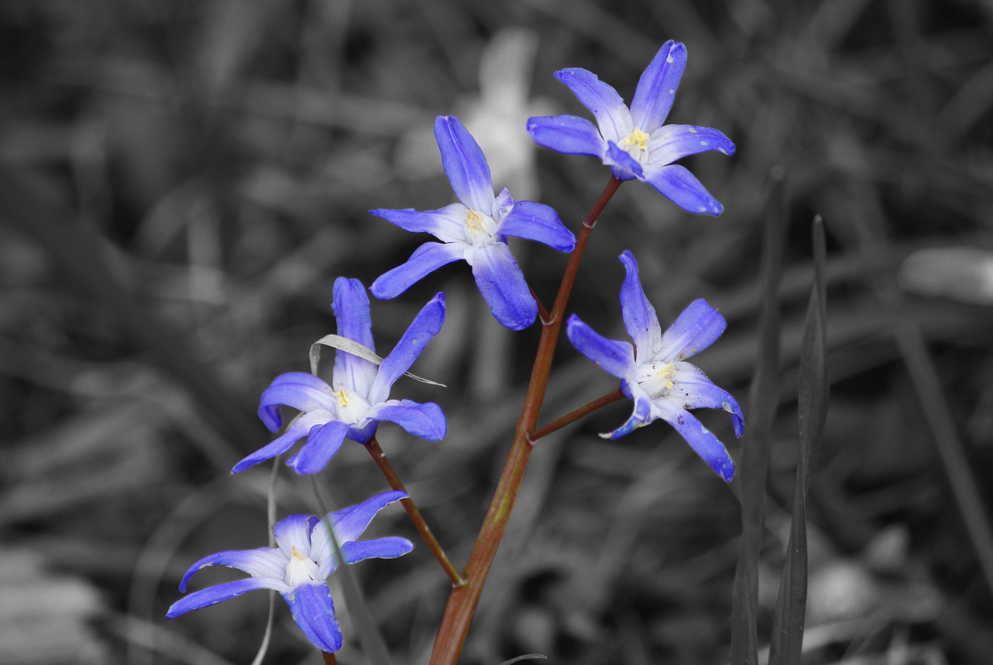 purplestems
